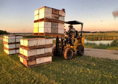 Moving hives for cranberry pollination