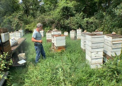 A typical apiary location