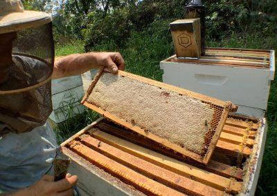 Beautiful frame full of ripe honey